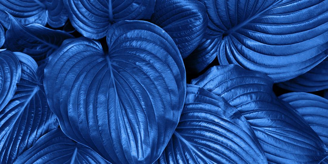 Classic Blue Stormblad